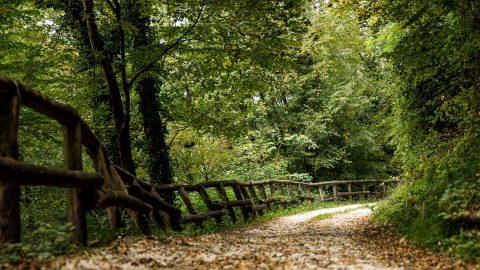 Sterrata verso Borgo Pradal